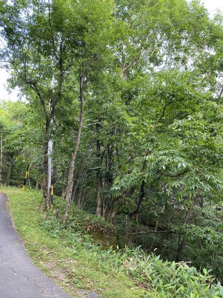長野・蓼科の自然林