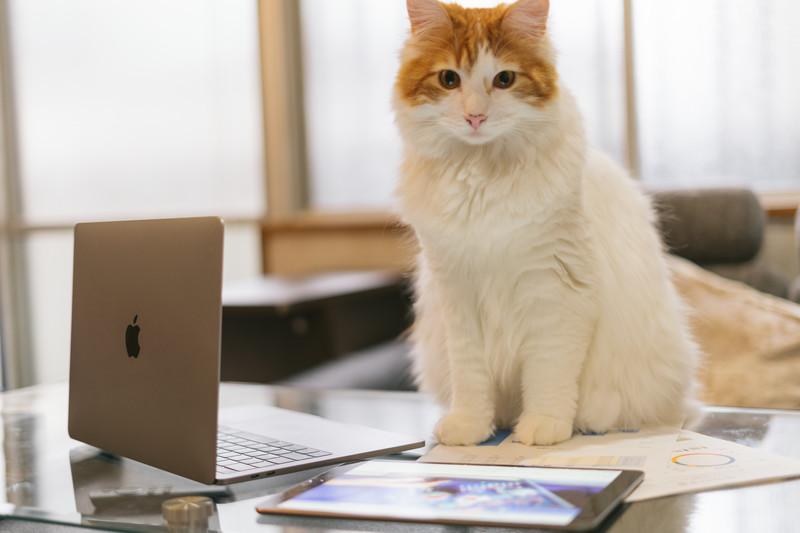 オンラインレッスンをする猫